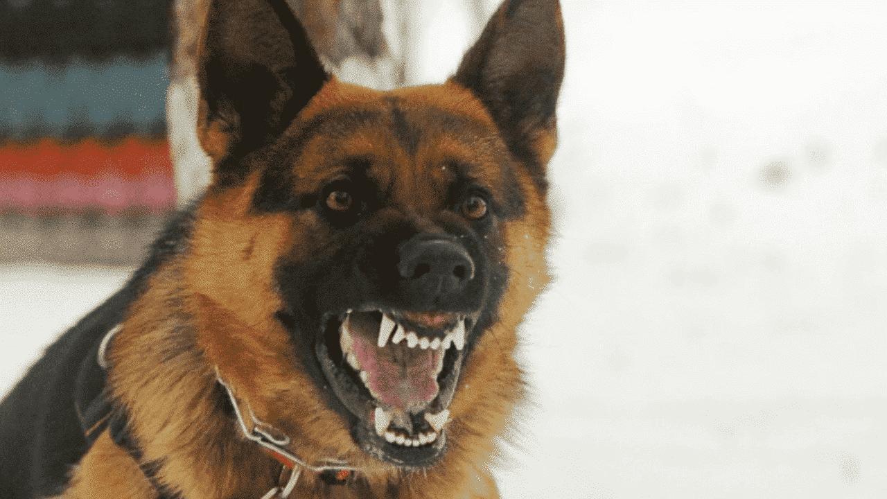 كلب يهاجم طفلا مصريا
