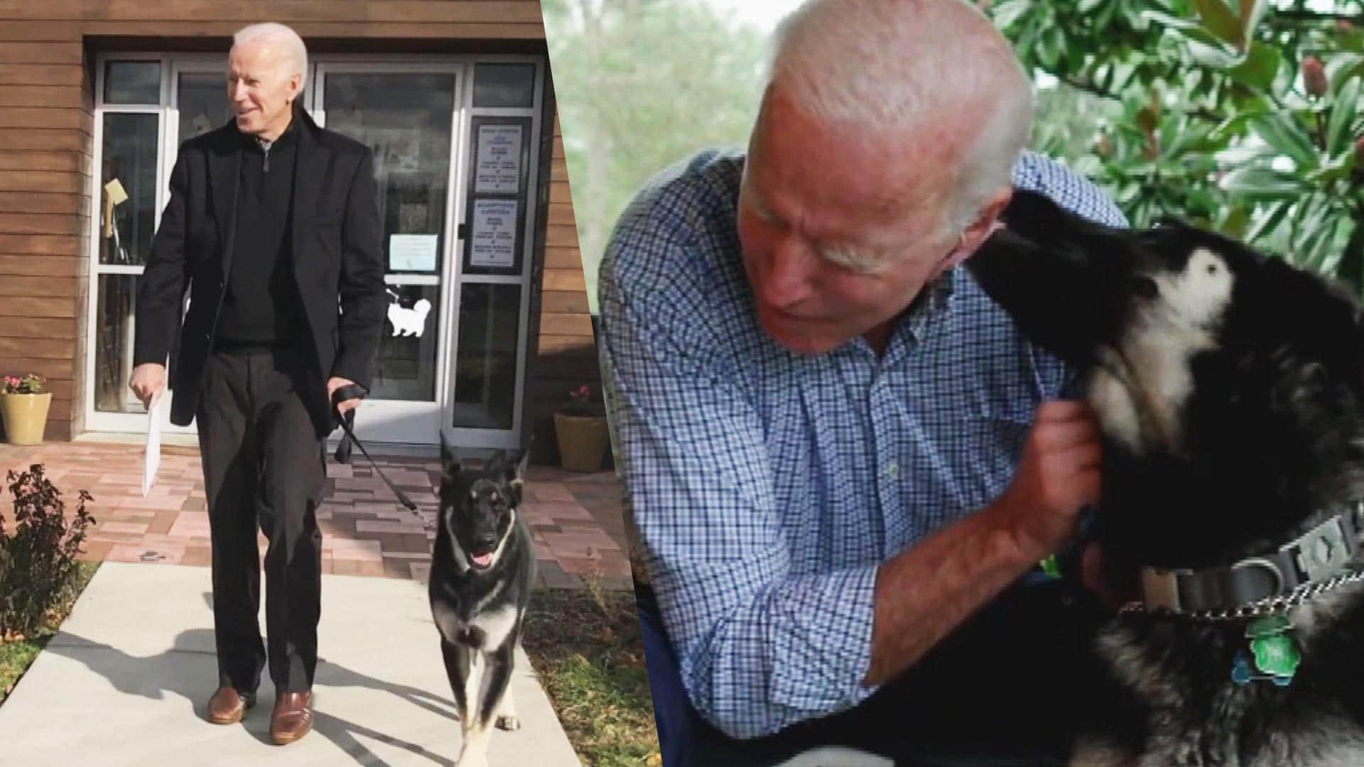 عمره 13 عاماً .. وفاة كلب بايدن والرئيس: نحبه وسوف نفتقده دائما (شاهد)