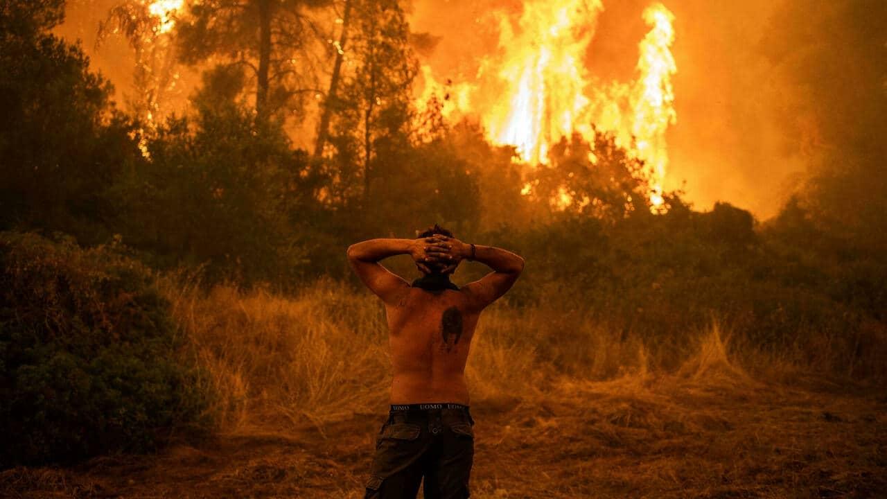 الجزائر تتهم المغرب وإسرائيل بالوقوف وراء مفتعلي حرائق الغابات