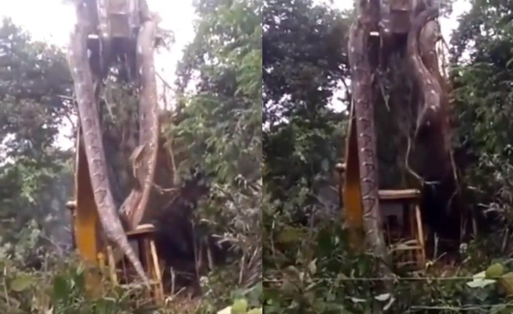 ثعبان عملاق طوله 10 أمتار عثر عليه سكان جزيرة بورنيو الأندونيسية