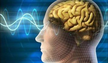 دماغ الإنسان